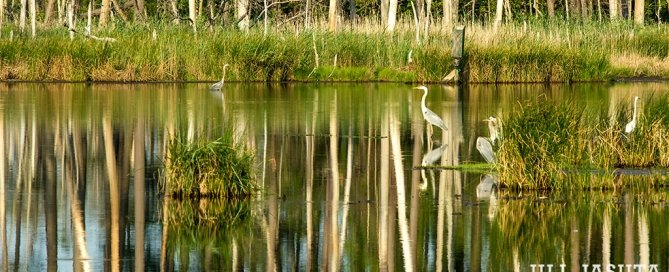 Blackwater National Wildlife Refuge; phtoo by Jill Jasuta