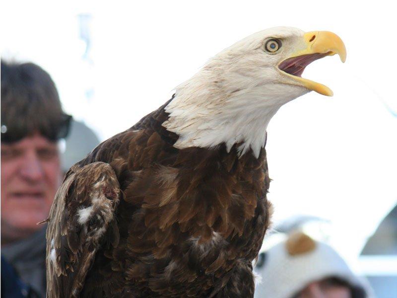 Eagle Festival